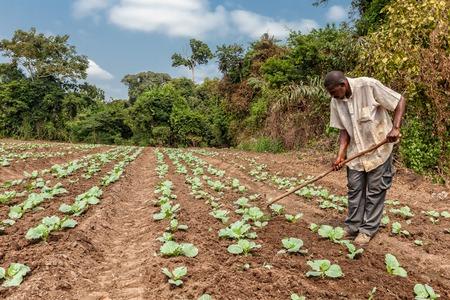 CABINDA  ANGOLA - 09 JUN 2010 - Landelijke boeren om land in Cabinda te bewerken. Angola, Afrika.