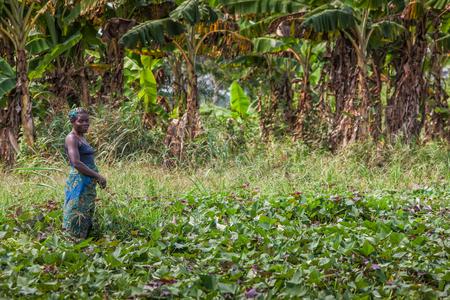 CABINDAANGOLA - 09 JUN 2010 - Rural female farmer working in the field.