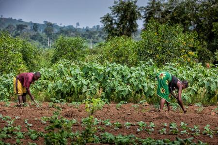 CABINDA / ANGOLA - 09 CZERWCA 2010 - Rolnicy rolni uprawiają ziemię w Cabinda. Angola, Afryka.