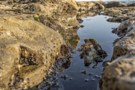 Oceanic pools with seaweed and rocks and marine life.