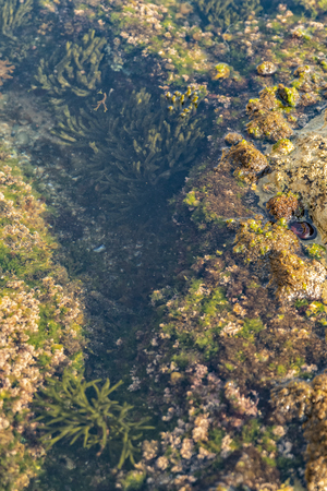Oceanic pools with seaweed and rocks and marine life. Seen from above.