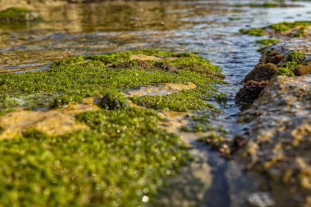 Rocks by the sea, with green algae and marine life. Estoril beach. Portugal Stock fotó