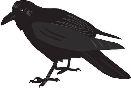 Illustration of a black raven Illustration