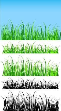green grass background, silhouette of grass