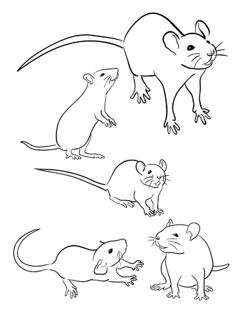 Mouse line art. Good use for symbol, web icon, mascot, sign, coloring or any design you want.