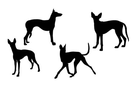 Ibizan hound dog silhouette 01. Good use for symbol, web icon, mascot, sign, or any design you want. Çizim