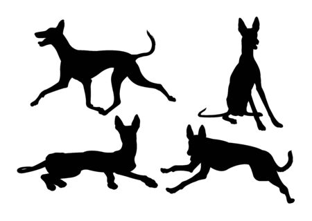 Ibizan hound dog silhouette 02. Good use for symbol, web icon, mascot, sign, or any design you want.