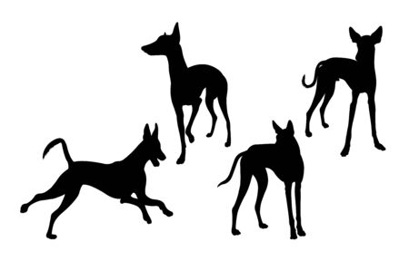Ibizan hound dog silhouette 03. Good use for symbol, web icon, mascot, sign, or any design you want.
