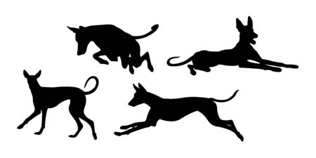 Ibizan hound dog silhouette 04. Good use for symbol, web icon, mascot, sign, or any design you want.