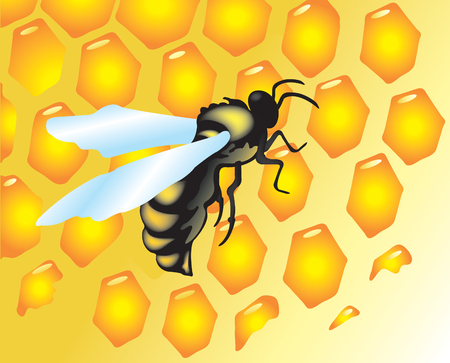 Vector illustration with bees and honey Vector