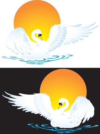 Vector illustration for swan in diferent background Vector