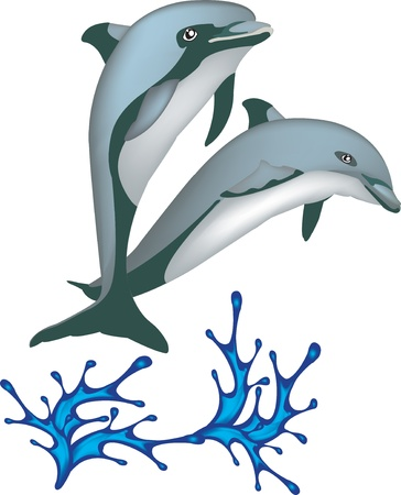 ocean fish: Two dolphins jumping from water isolated on white background