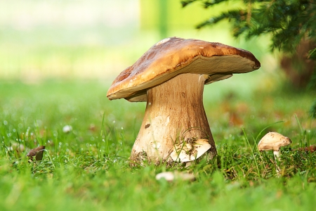 Funghi nel sole del mattino Archivio Fotografico