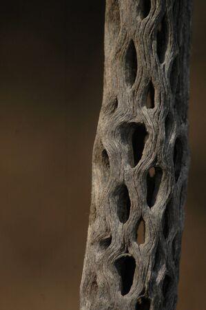 Cactus wood - Close up #2