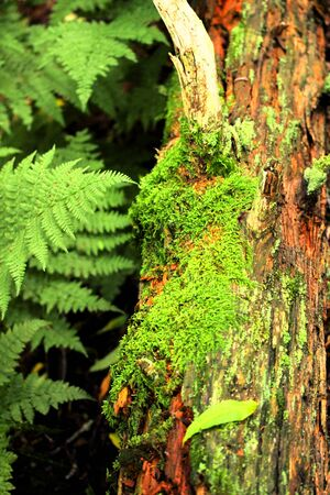 Fern with Moss on a log in Pisgah National Forest 版權商用圖片