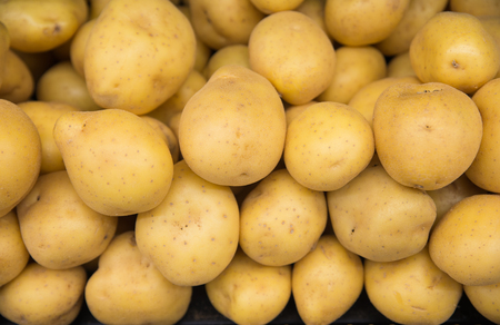 Raw gold potatoes for food