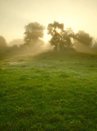 medow: Foggy medow at susrise