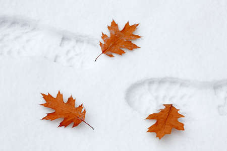 snowbank: Snowy footsteps with autumn leaves Stock Photo