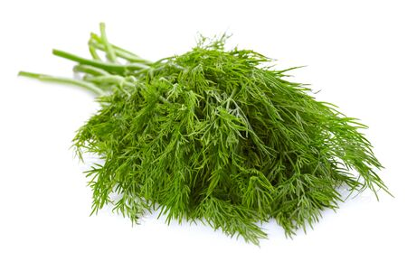 Dill over white background photo