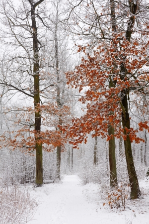 Winter forest Stock Photo - 13681684