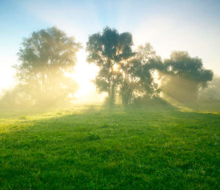 medow: Foggy meadow at sunrise Stock Photo