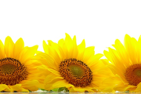 copyspase: Three sunflowers with copyspase