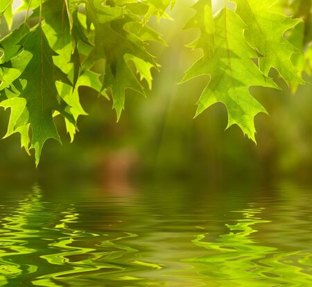 Green leaves reflecting in the water photo