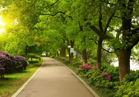 healthy path: Summer park road