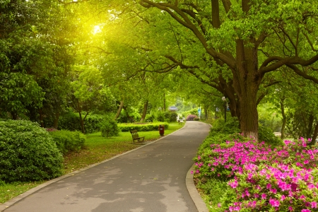 夏の公園の道