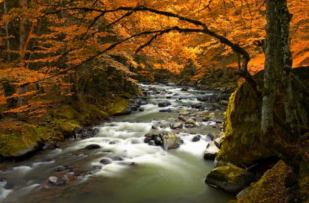 water  scenic: Autumn landscape with trees and river