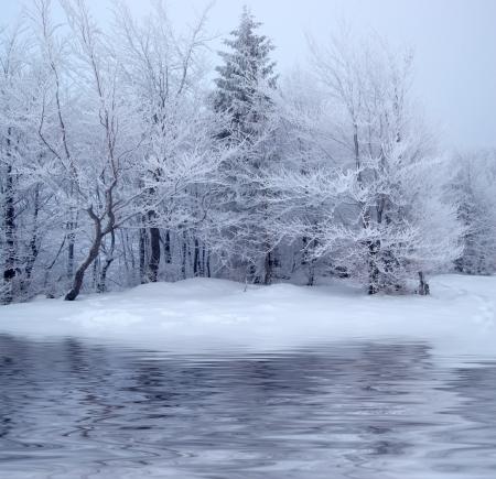 blizzard: B�ume im Winter