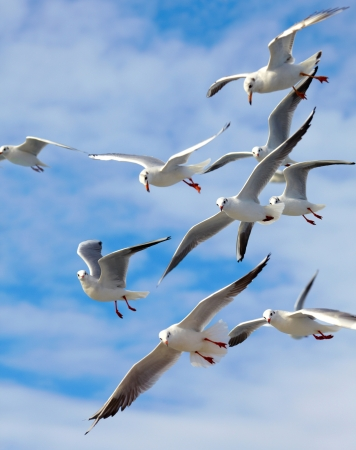 the seagull: Gaviotas