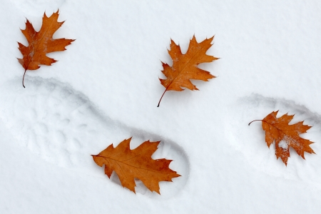 dint: Snowy footsteps with autumn leaves Stock Photo