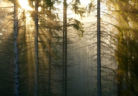 Forest with fog and sunlight  photo
