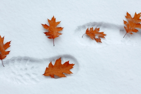 Snowy footsteps with autumn leaves photo