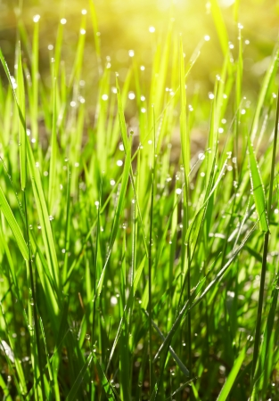 Green grass with waterdrops photo