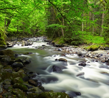 Mountain River in the wood photo