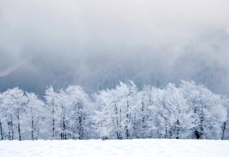snow scenes: Winter trees