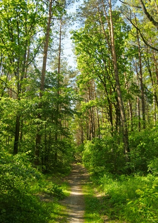 healthy path: Summer park Stock Photo