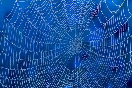 Spider web with water drops photo