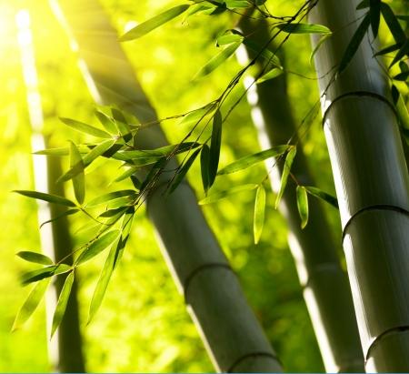 Bamboo forest background. Shallow DOF Standard-Bild