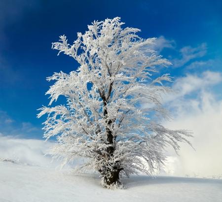 sleet: Winter tree Stock Photo