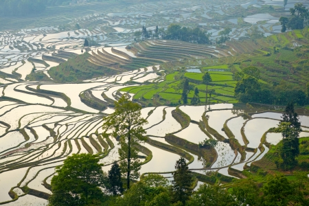 Rice terraces. Yunnan, China. photo
