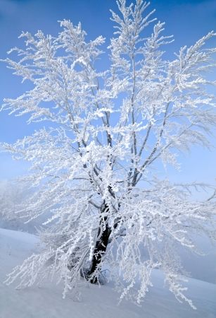 christmas scenic: Winter tree Stock Photo