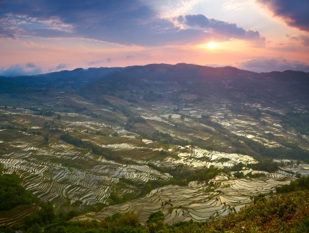 terracing: Sunset at rice terraces