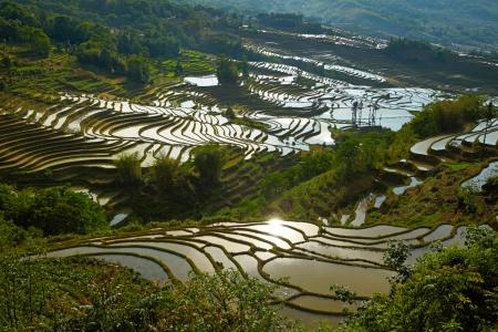 Rice terraces. Yunnan, China. photo