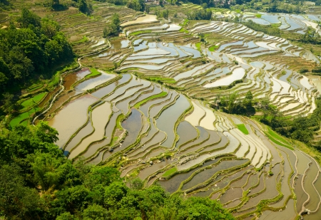 terracing: Rice terraces