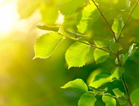 dof: Green leaves background. Shallow DOF