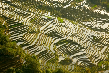 terracing:  Rice terraces background