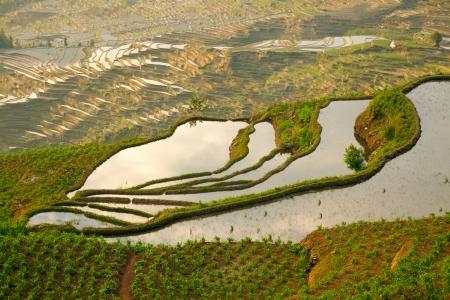 yuanyang: Rice terraces. Yunnan, China